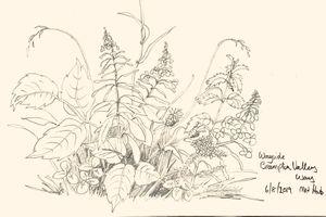 Wild Flower Sketch