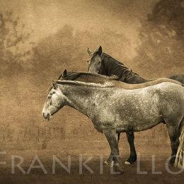 Ballinclamper-horses