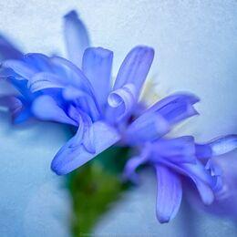 Blue-twirl-4shot-blue-texture