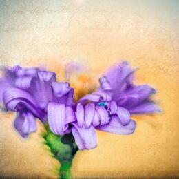 Blue-twirly-flower-textured