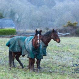 Camphire-Horses