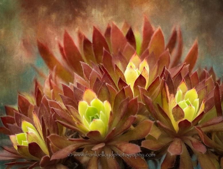 Colourful-Cactus