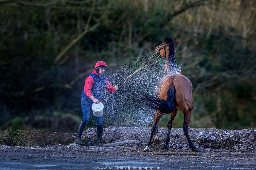 Conor-Casey-washing-horse
