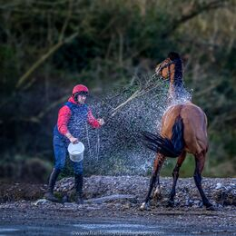 Conor-Casey-washing-horse