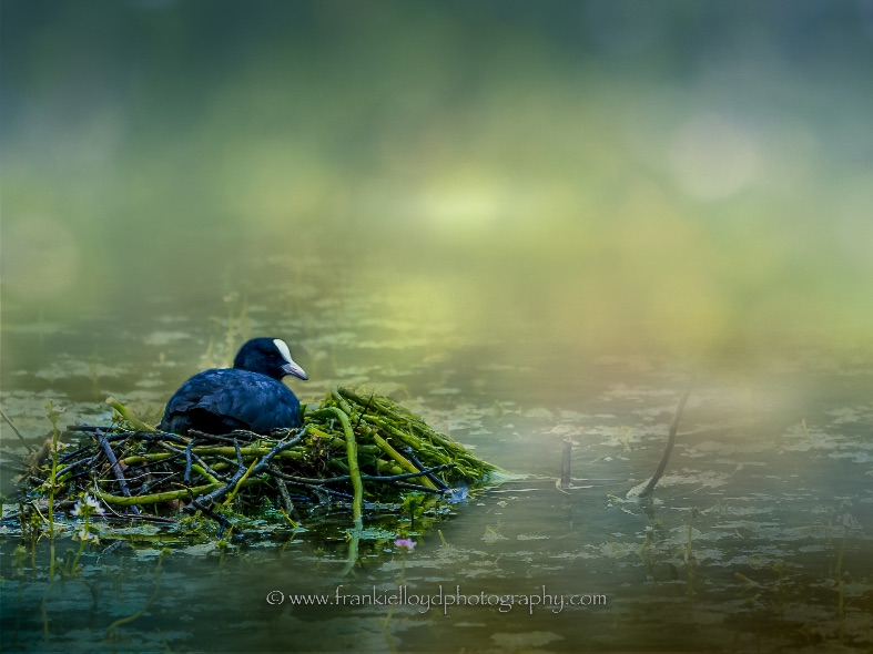 Coote-on-nest-textured