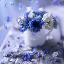 Cornflower-Cup