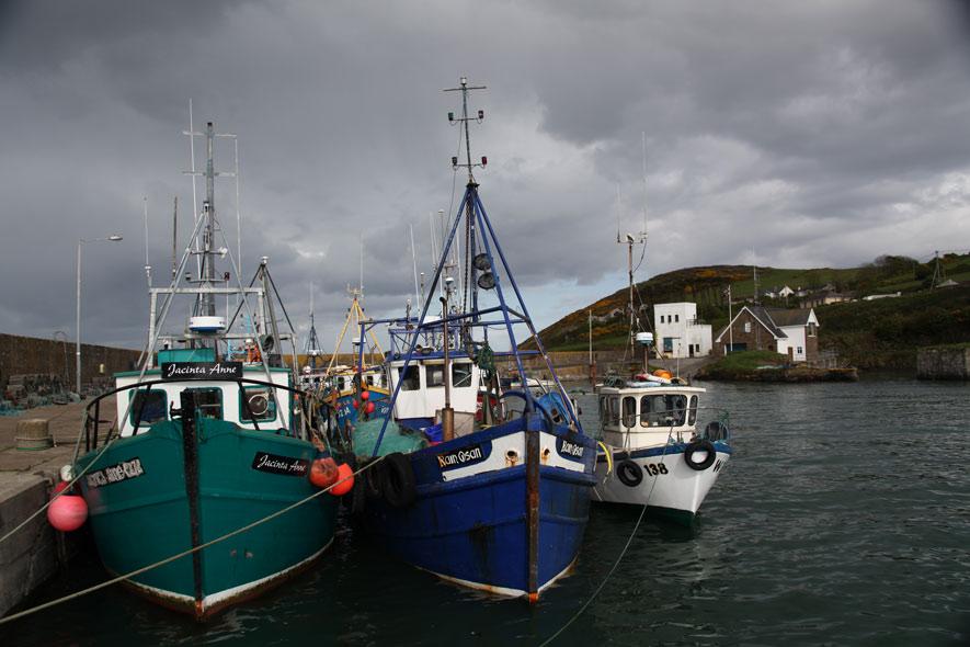 Docked-Boats