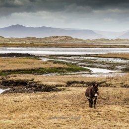 Donkey-Glenbeigh