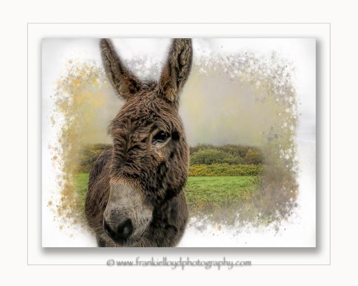 Donkey-framed