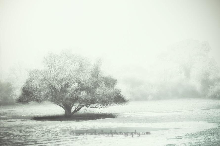 Frosty-Tree-
