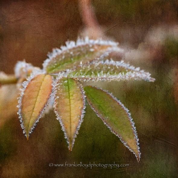 Frozen-Leaves-textured