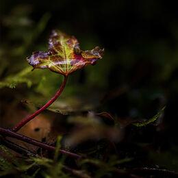 Glenshelane-water-leaf-12x8