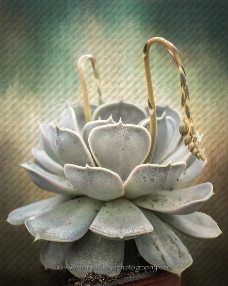Grey-Cactus-tex1