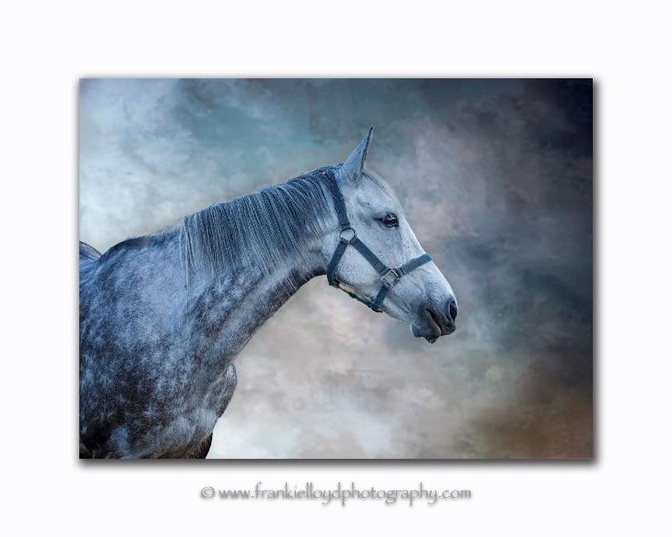 Grey Mare Helvic