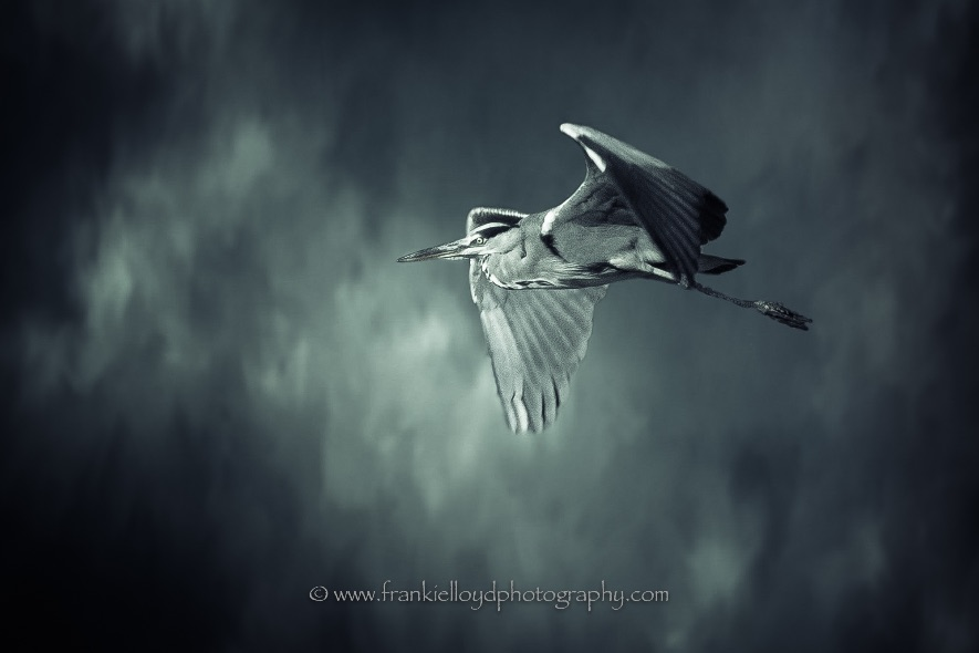 Heron-Blue-Background