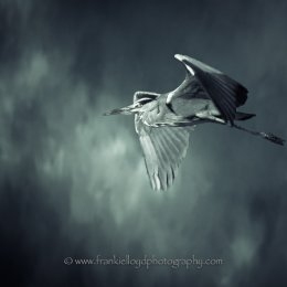 Heron-Blue-Background