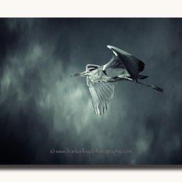 Heron-Shadow