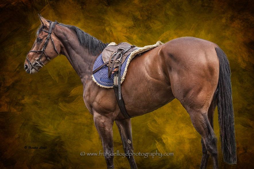 Horse-JaJa-McCool