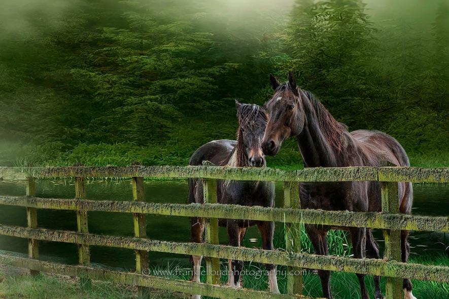 Knocklofty Horses