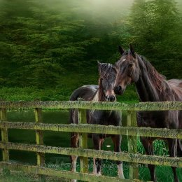 Knocklofty Horses