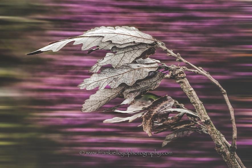 Leaves-Blowing-Edit