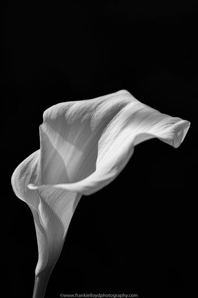 Lily-bnw-2020