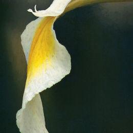 Lily-leaf-image-wash