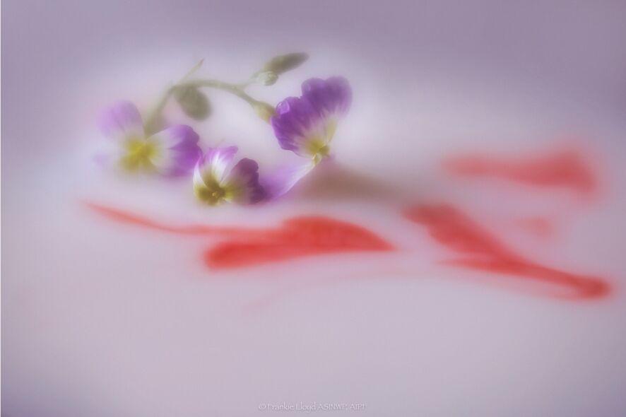 Little-garden-flower-with-red-heart-lensbaby12x8