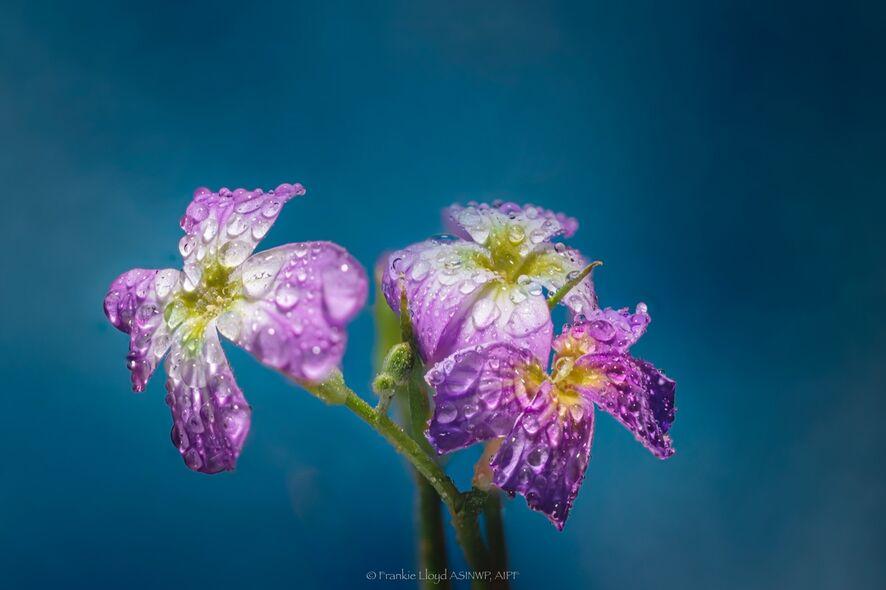 Little-garden-flower