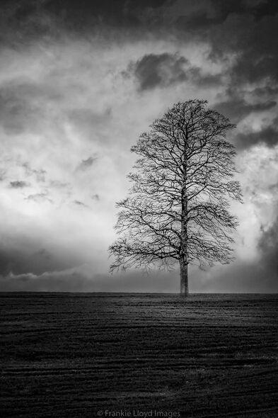 Lone-tree-Marlfield12x8-BnW