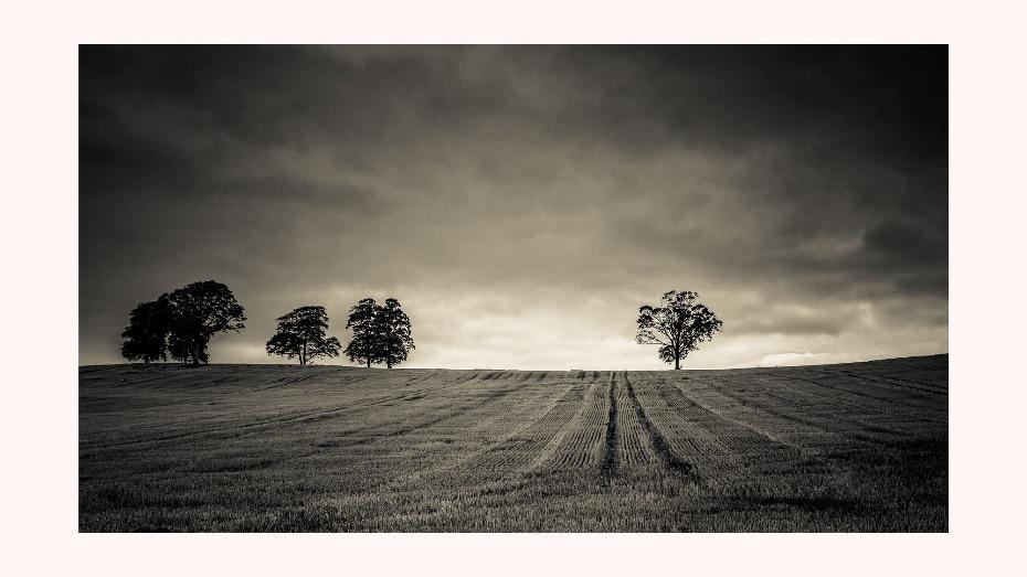 Marlfield-Trees-background