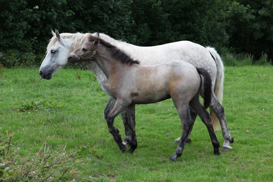 Melod'ys Ponies