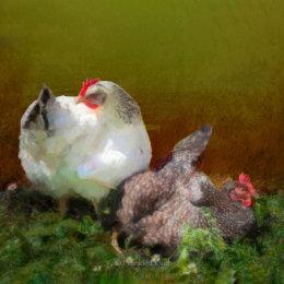 My-Hens-watercoloured