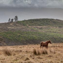 Nire-Horse