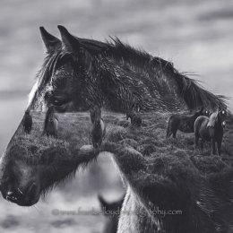 Nire-Horses-Double-Exp