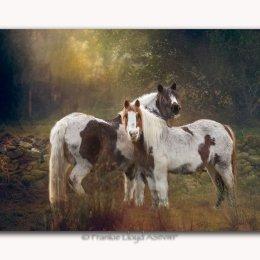 Nire-horses