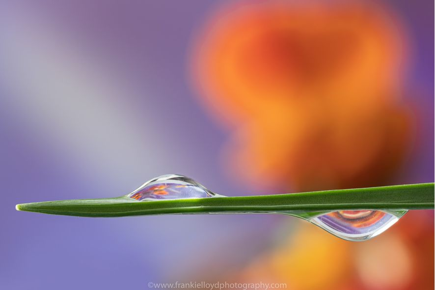 One-Up-One-Down-waterdrops