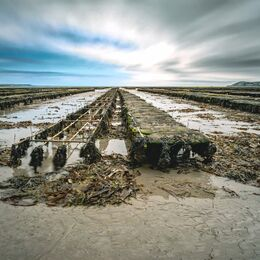 Oyster-beds-2-colour