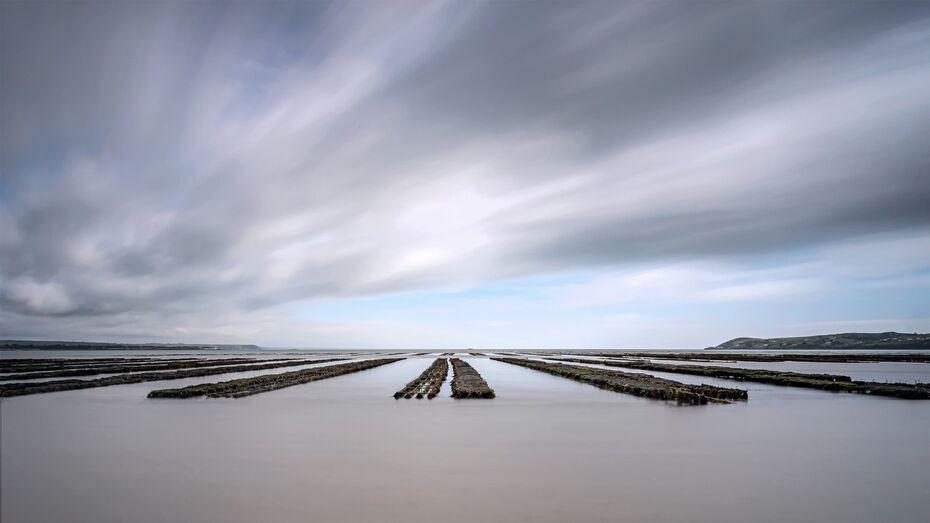 Oyster-beds-with-water-16x9