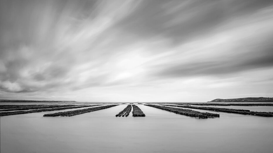 Oyster-beds-with-water-Bnw-16x9