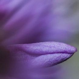 Purple-flower-leaf