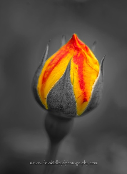 Red-and-Yellow-bulb
