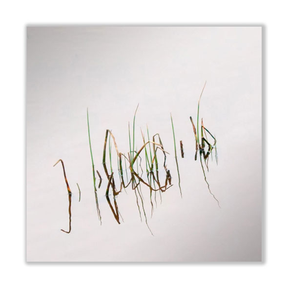 Reeds-squared