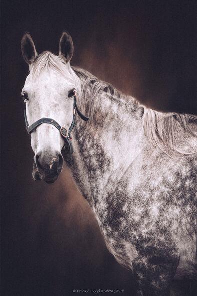 Ring-Grey-Horse-portrait