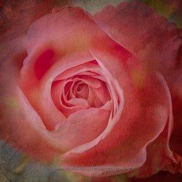 Rose-textured