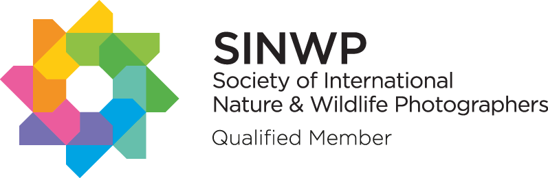 SINWP-Qualified-Member