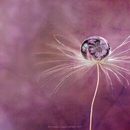 Single-Dandelion-textured