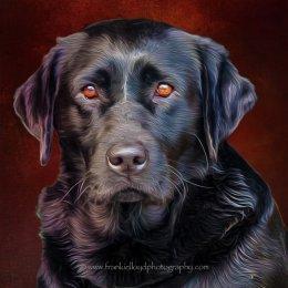 Sooty-Portrait-16x16