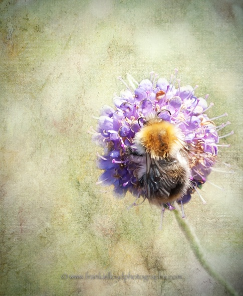 Textured-Bee-and-Flower