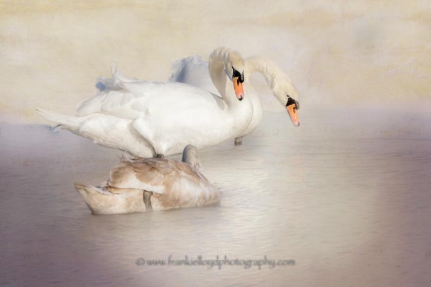 Three-Swans-Annestown